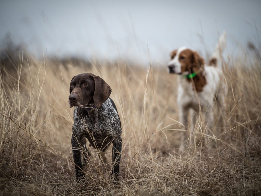 Two hunters walking through a field of tall grass.