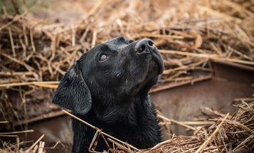 How to Make Every Hunting Season Your Dog's Best Yet