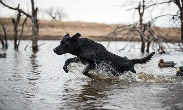 How to Keep Your Dog Hunting All-season Long