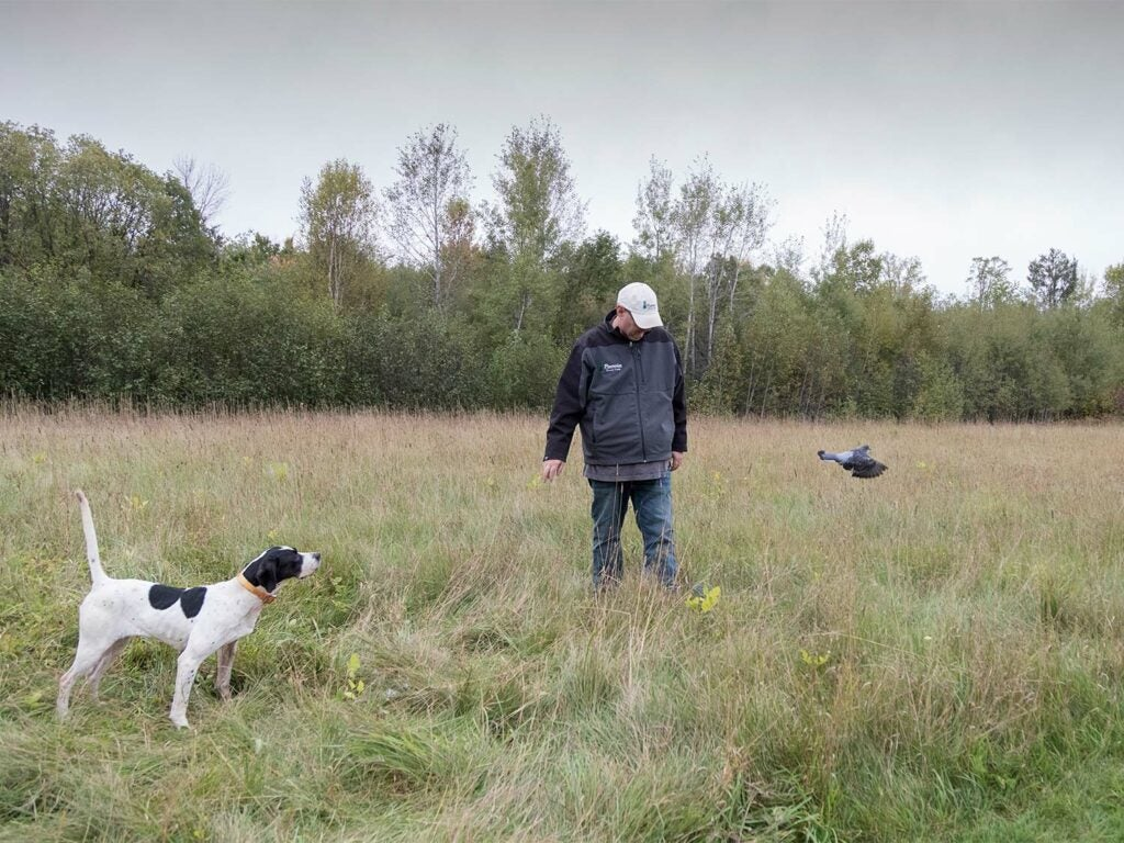 A hunter training a hunting dog in an open field.