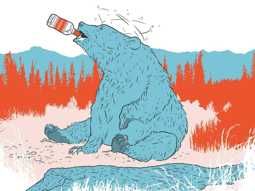 Illustration  of a bear sitting on its butt with a bottle of liquor in its mouth.