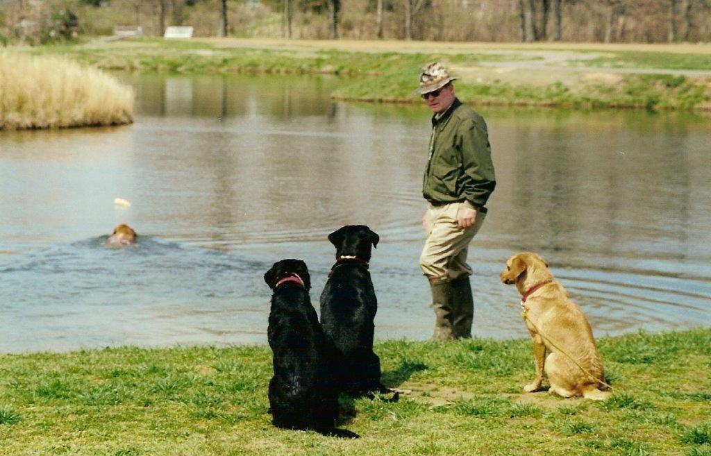 A man trains four hunting dogs for retrieving ducks from the water.