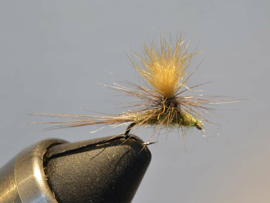 A yellow and green fuzzy fly lure held in vice.