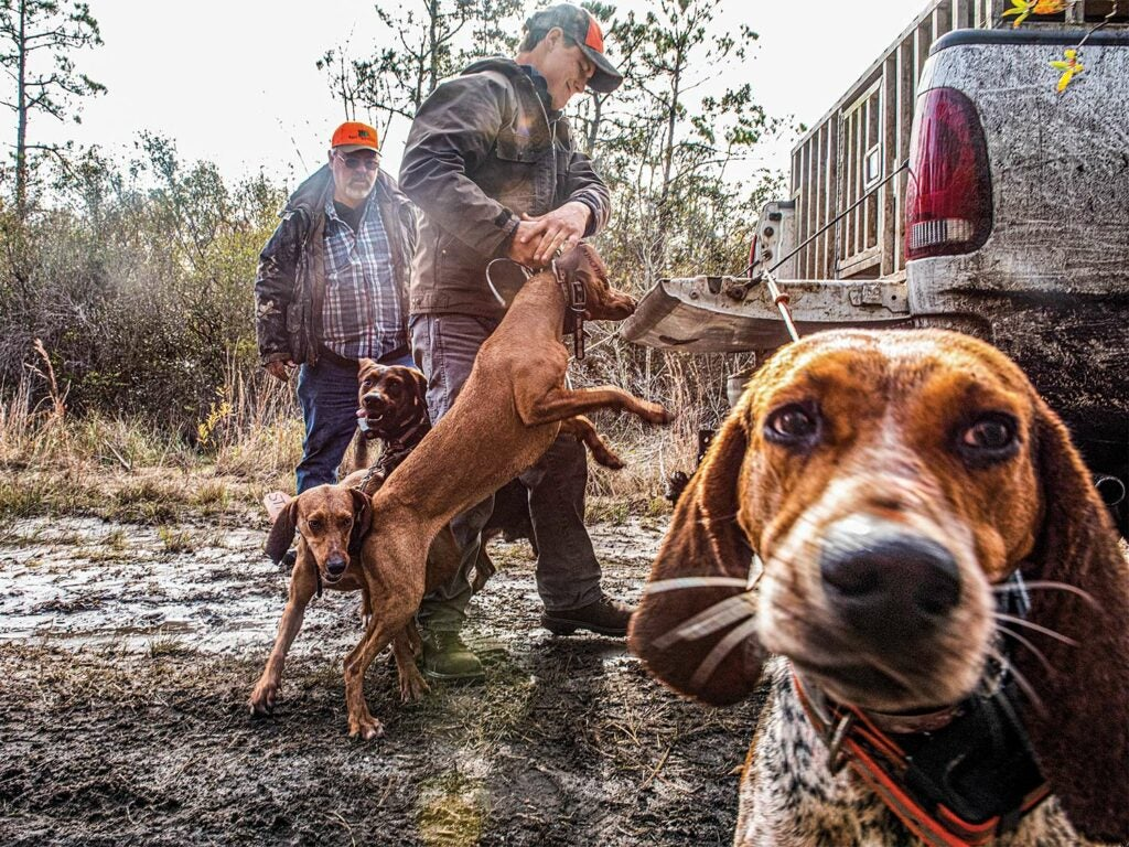 Two male hunters handled four hunting dogs while standing in the mud next to a truck with the tailgate lowered.