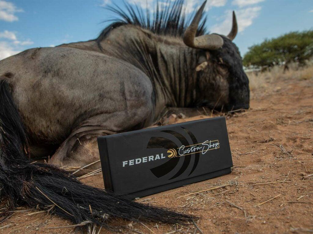 A box of Federal Custom Sho ammunition next to a large wildabeast.