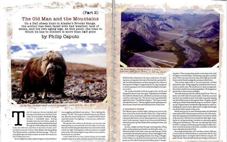musk-ox-mountains