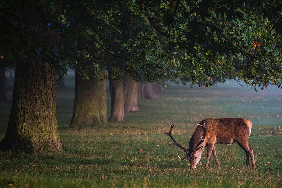 deer next to trees