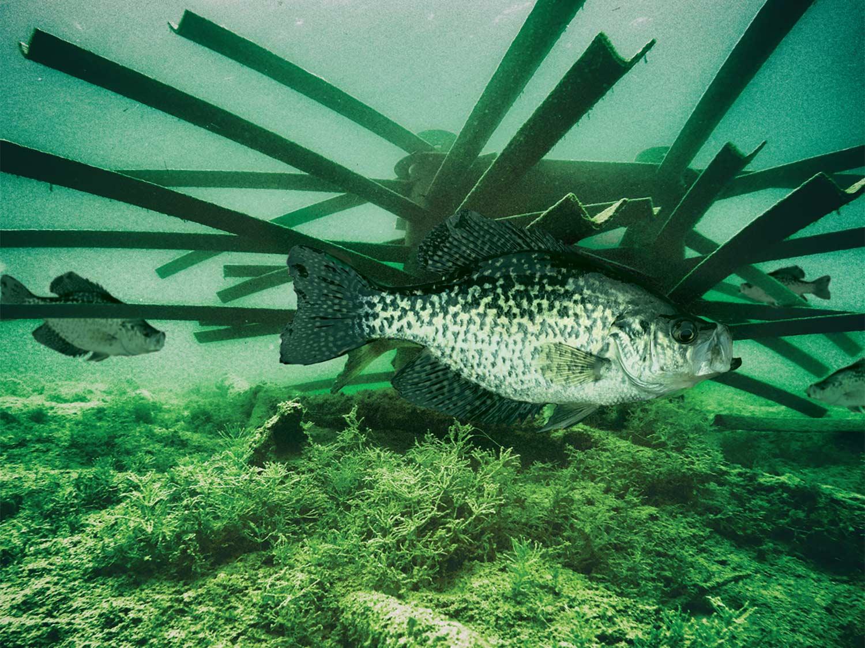 A Mossback Fish Habitat