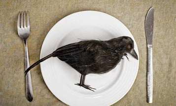 How to Eat Crow