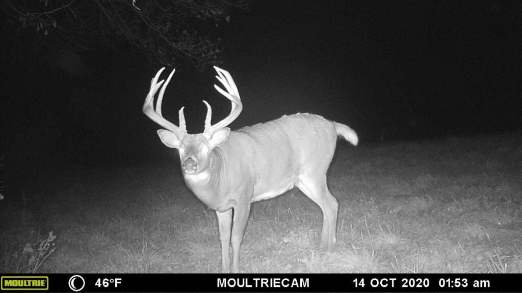 Aggressive trail-camera placement allowed Schmit to find Mr. Big's core area this fall.