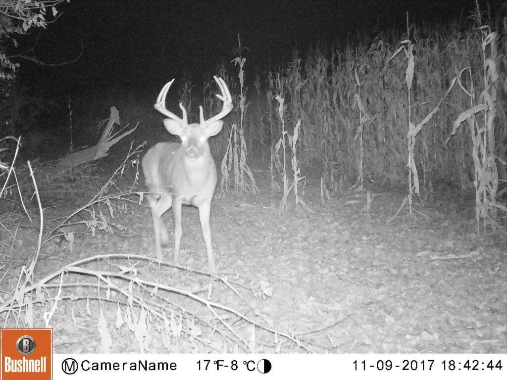 A trail-cam photo of Mr. Big as a 140-class 10-point in 2017.