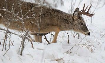 How to Hunt Deer in 6 Kinds of Snow