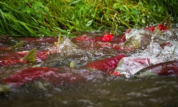 Army Corps of Engineers Denies Permit to the Pebble Mine in Alaska's Bristol Bay