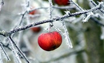 How to Hunt Fruit Trees for Late-Season Deer