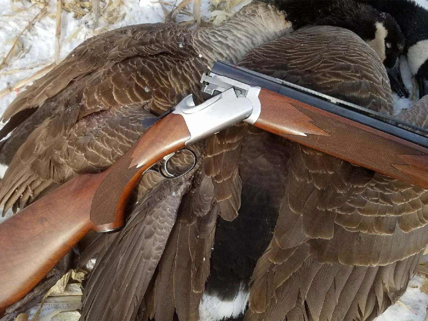 The author's Ruger Red Label with a pair of Canada geese.