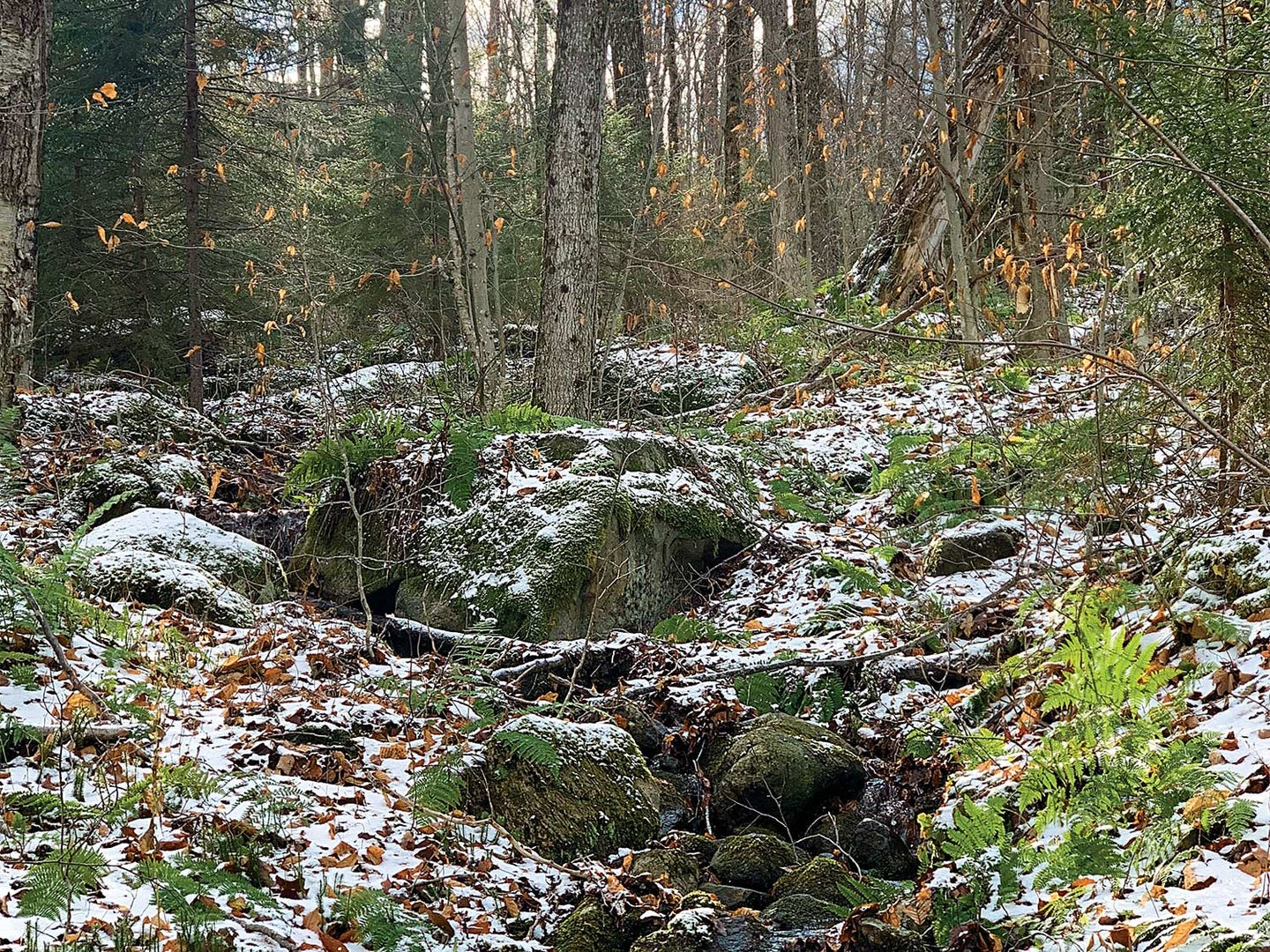 A snow covered forested area and spring.