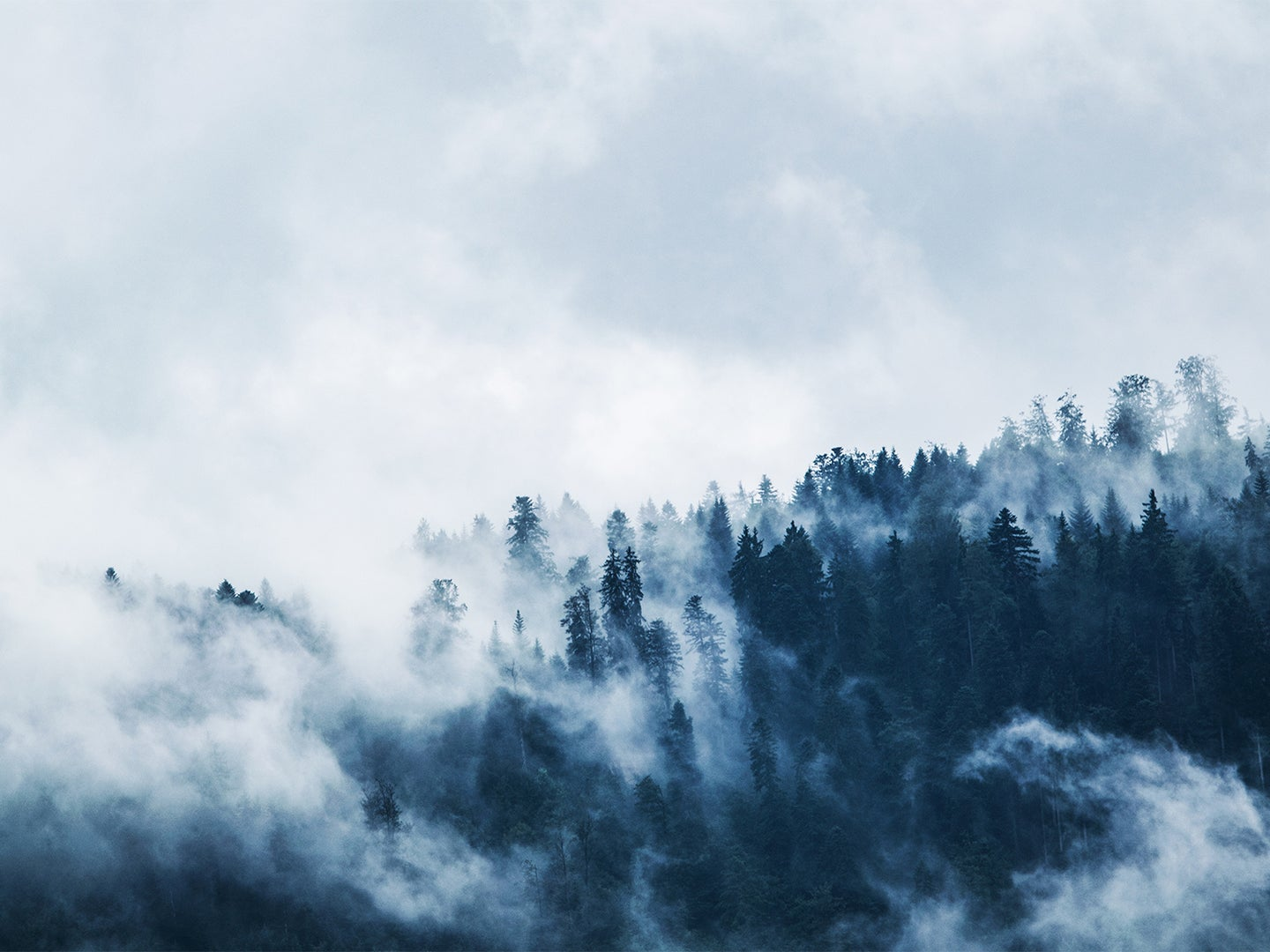 Fog billowing off a misty mountain forest.