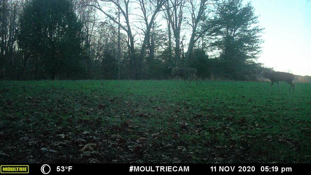 A large open field with a few deer standing in it.