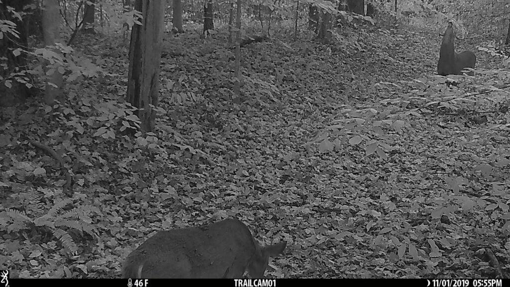 A deer walks through a pathway at night.
