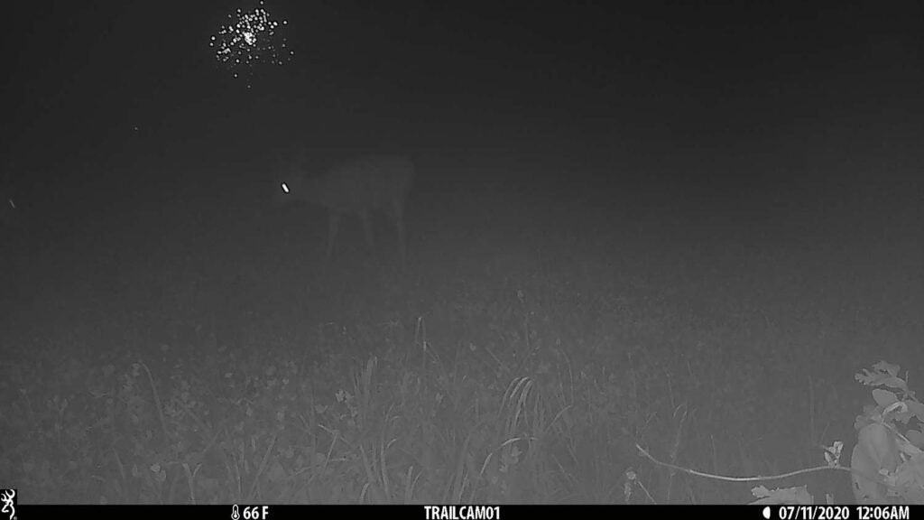 Trail camera photo of a deer at night.