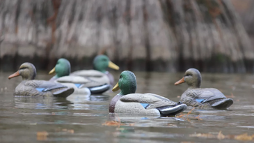 A group of duck decoys out on the water.