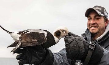 6 Expert Tactics for Hunting Late-Season Ducks