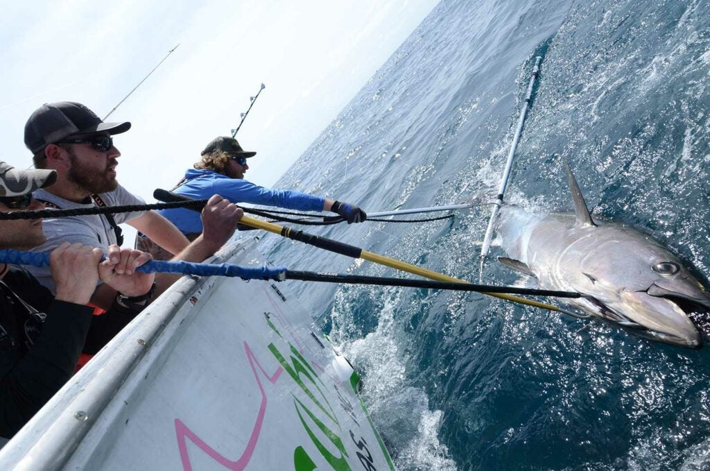 Two anglers pull a bluefin tuna boat side.