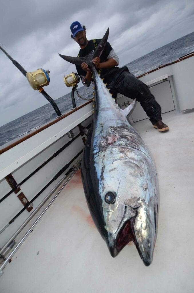 An angler holds up a large bluefin tuna.