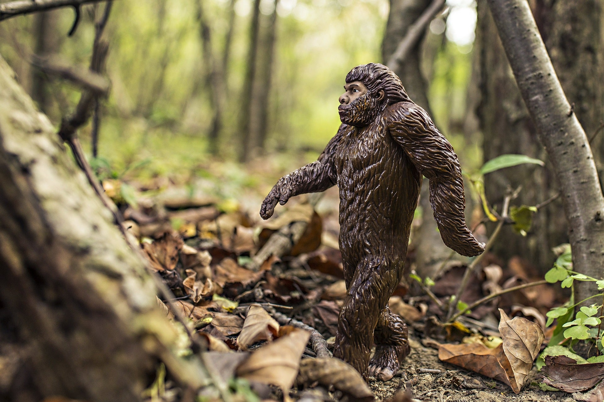 Bigfoot figure walking in the woods.