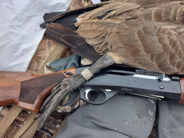 A goose next to a Benelli Montefeltro shotgun.