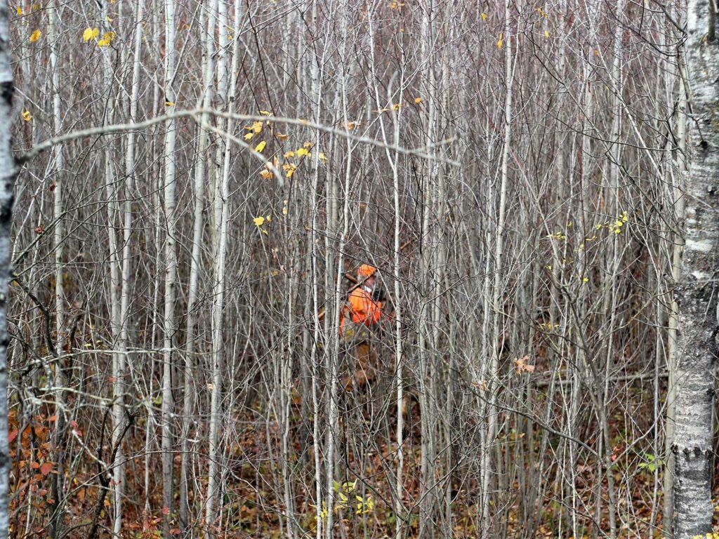 A hunter walks through the woods, obscured by the trees.
