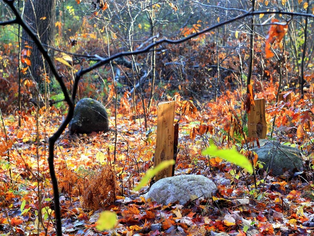 Wooden markers next to grave stones in the woods.