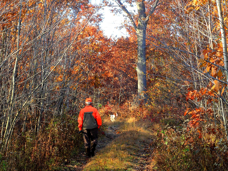 A hunter walks through a trail behind a hunting dog.