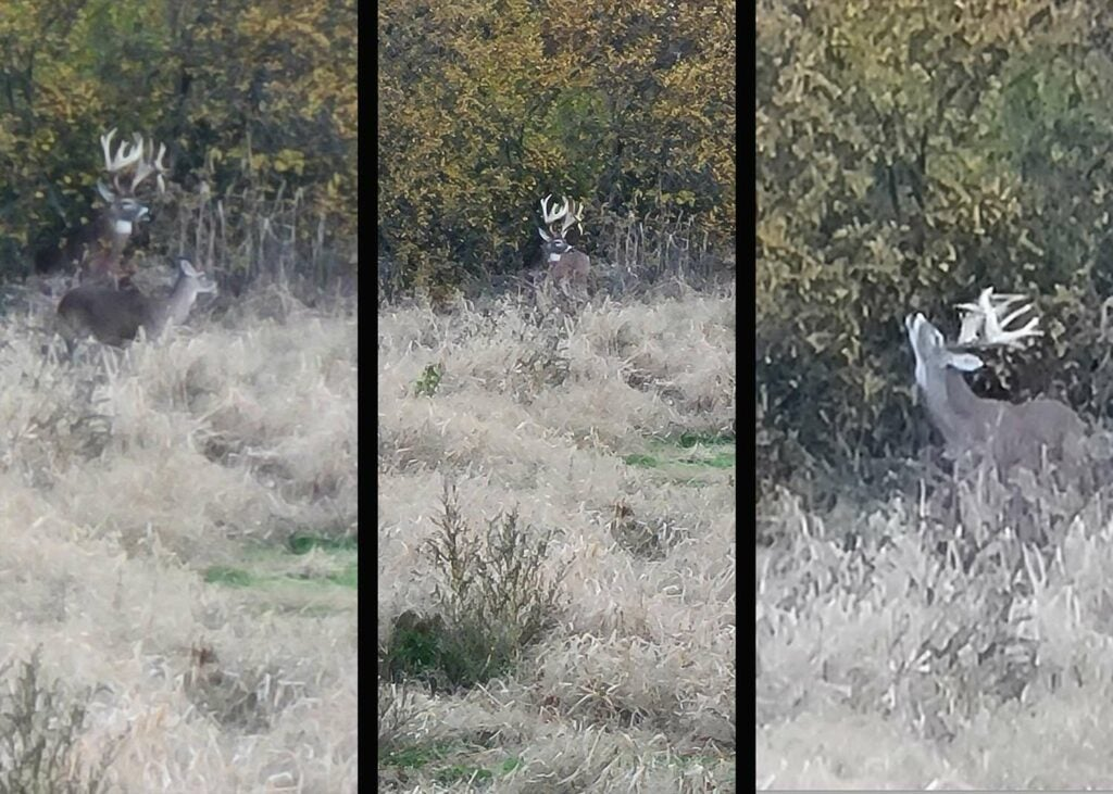 Side by side images of a deer on trail camera
