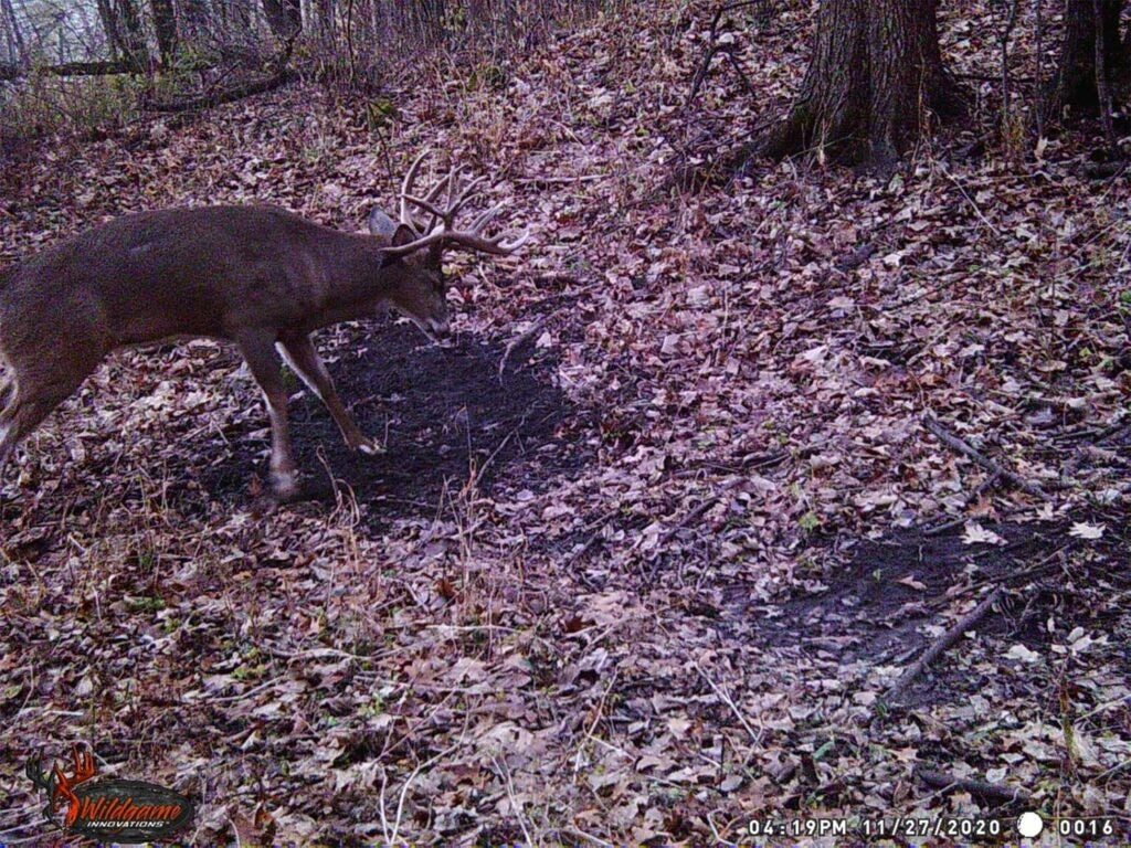 Trail camera photo of a whitetail buck in the woods.