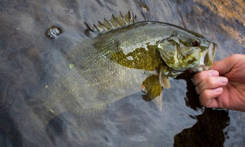 5 Great Lures to Catch More Prespawn Bass