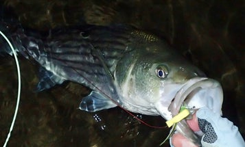 6 Things Salt Water Fly Anglers Can Learn from Plug Fishermen