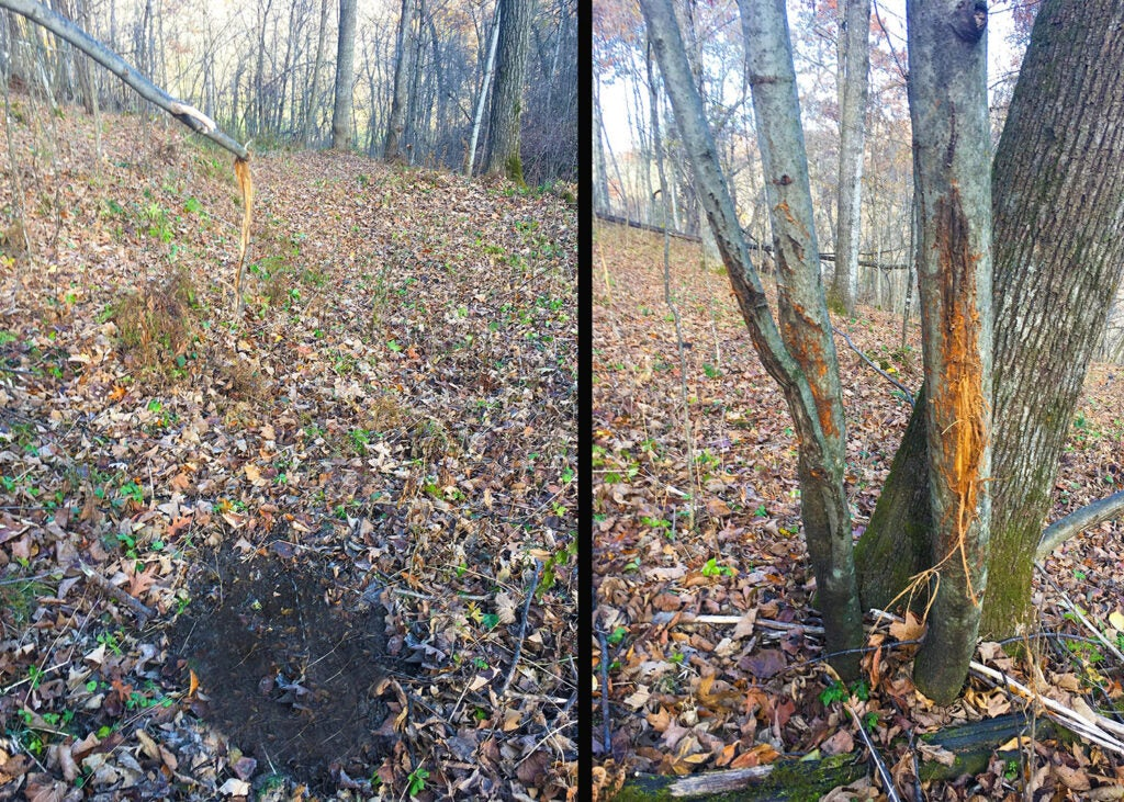 A side by side image of deer scrapes and rubs in the woods.