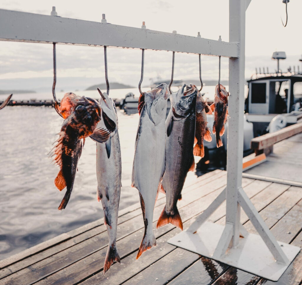 Fish hanging on pole on a dock.