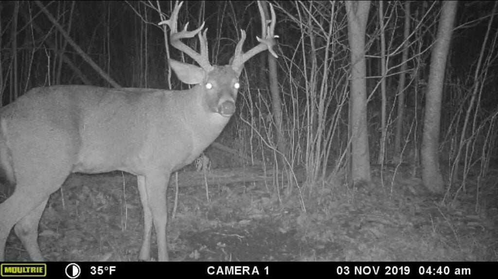 A black and white trail camera image of a whitetail buck at night.