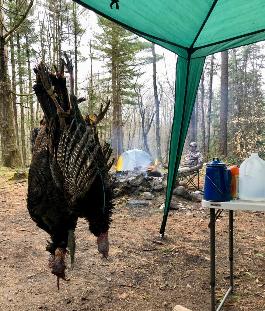 Two turkeys hanging in hunting camp.