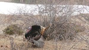 8 Overlooked Spring Turkey-Hunting Hotspots