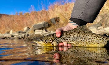 A Trout Bum in the Making