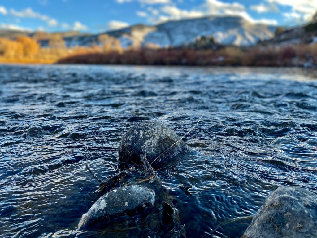 trout fishing in the Colorado River
