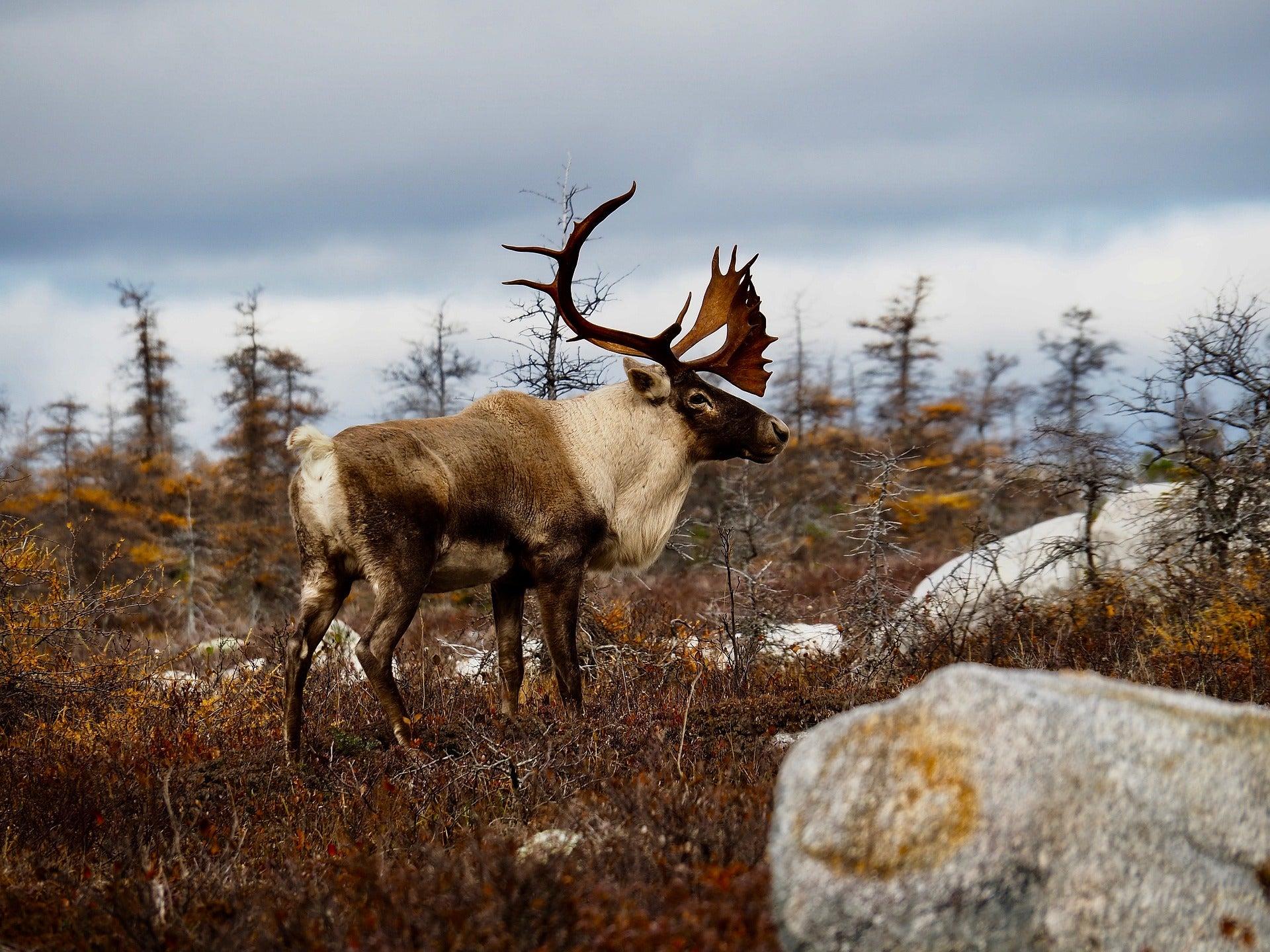 Alaska Opens Hunting Permit Raffle to Combat COVID-19 Travel-Related Revenue Shortfall