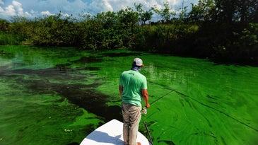 fisherman standing on a boat in an algae bloom