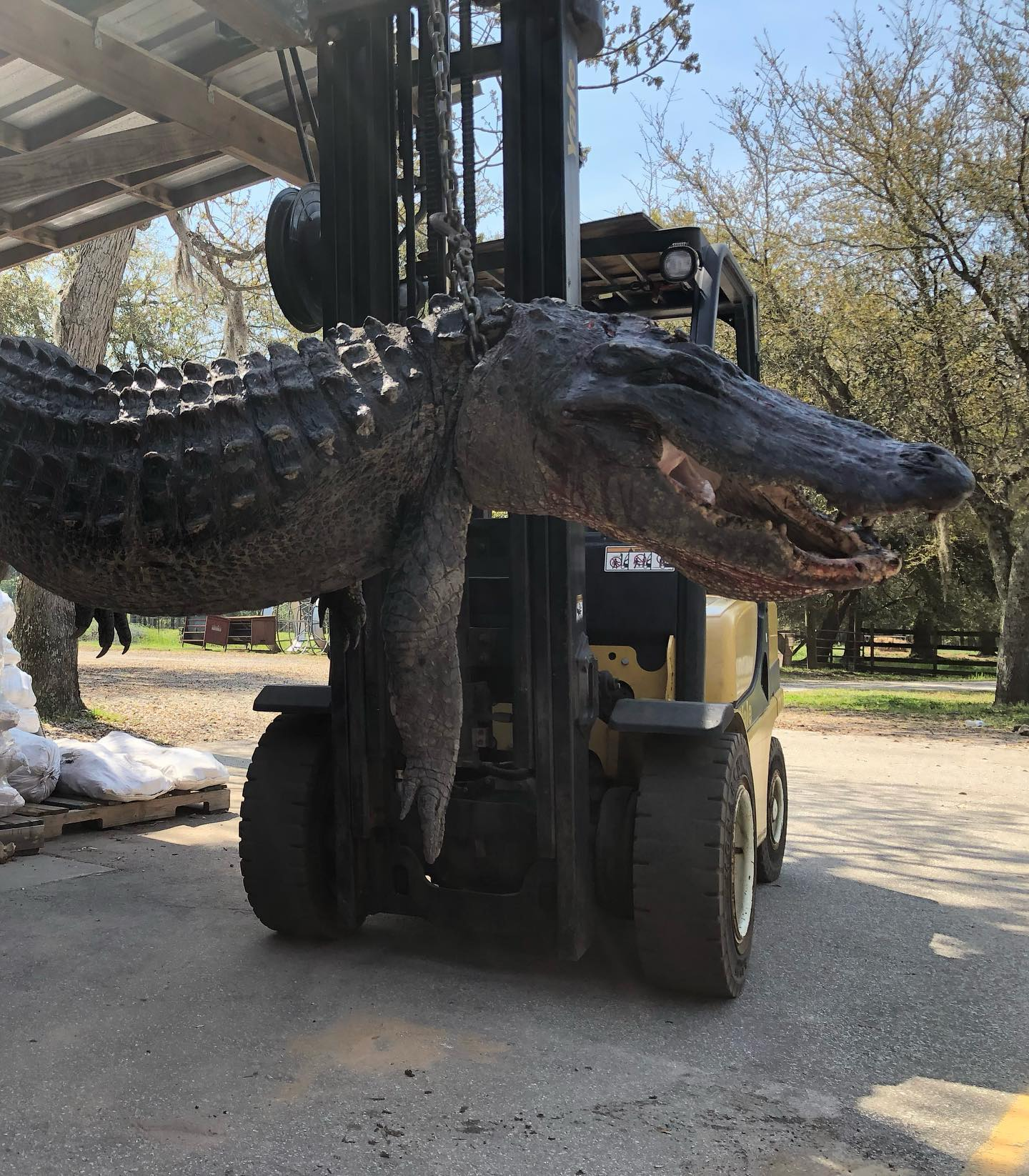 Dog-Eating Alligator Killed in South Carolina