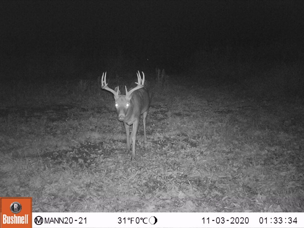 A trail-cam photo of a whitetail buck.