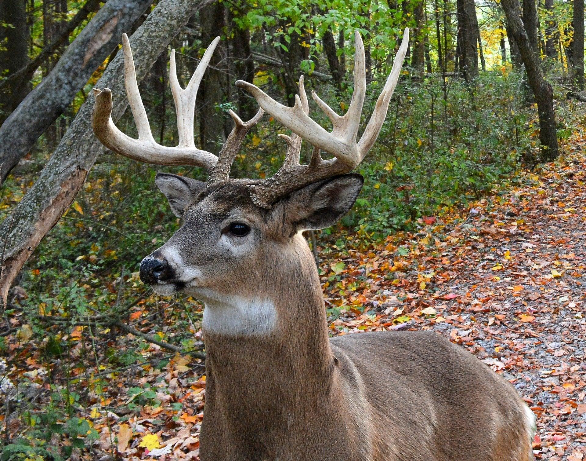 Major Pennsylvania Hunting Season Changes