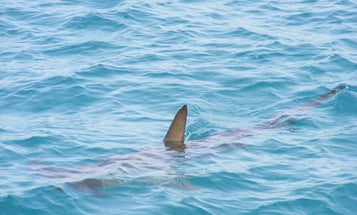 New High-Tech Shark Deterrent to Be Tested on Cape Cod